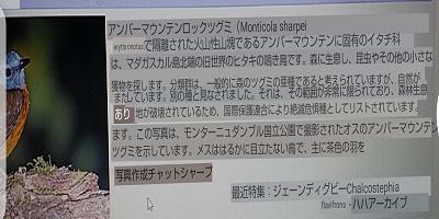 翻訳後画像
